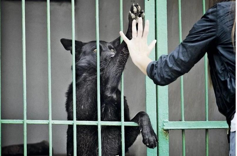 В Крыму построят еще два приюта для животных