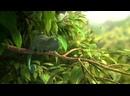 Короткометражка - Наша чудесная природа - Обычный хамелеон
