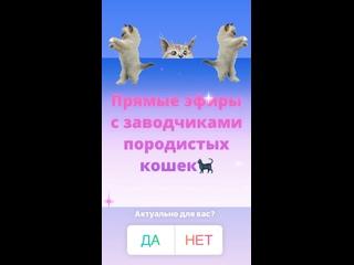Видео от РФОКошкиРегион38