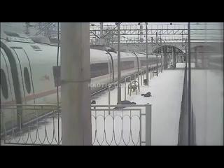 18+ Сбил поезд