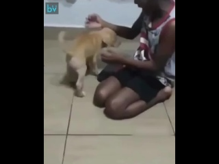 Когда дождался собачку