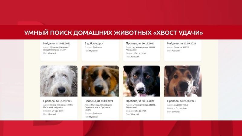 В России запустился сайт для поиска пропавших собак и кошек Хвост удачи