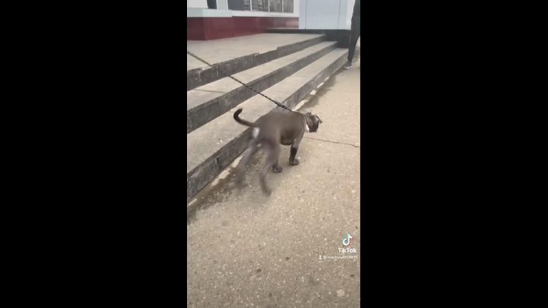 Видео от Марии Колесниковой