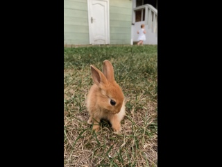 Video von Питомник карликовых кроликов Беларусь