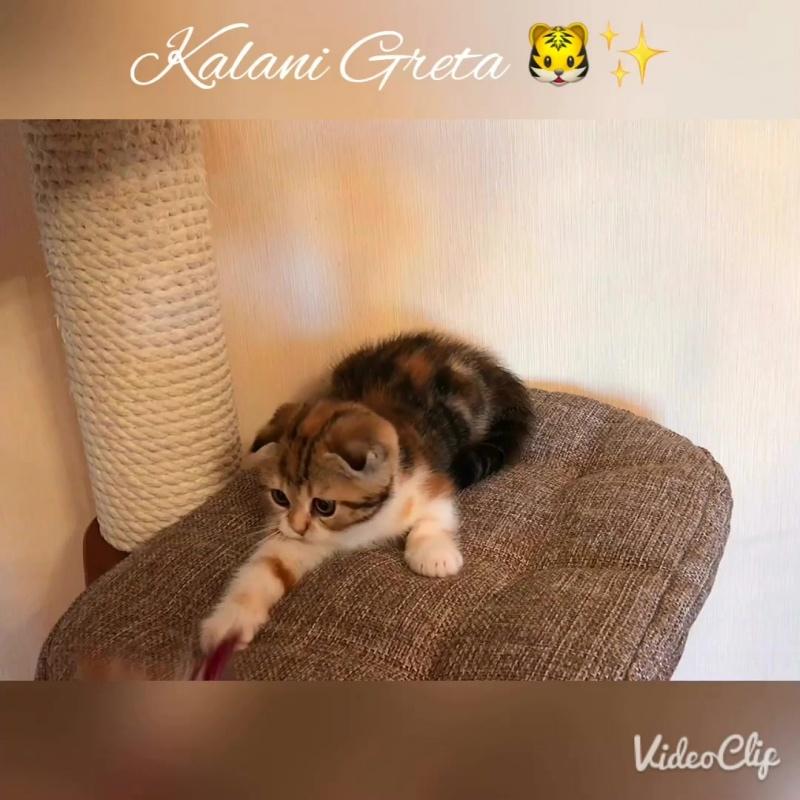 Kalani Greta