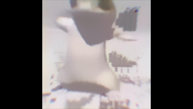Ящерка танцует под краш avidemux