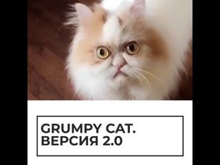 Grumpy cat. Версия 2.0