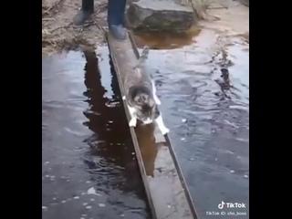 Кот аккуратно переходит речушку