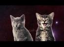 Приколы с Котами 2017 Смешные коты и кошки До Слёз Fun 720p-720p.mp4