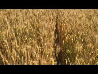 Video by Elena Alexeeva