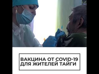 Вакцина для жителей тайги