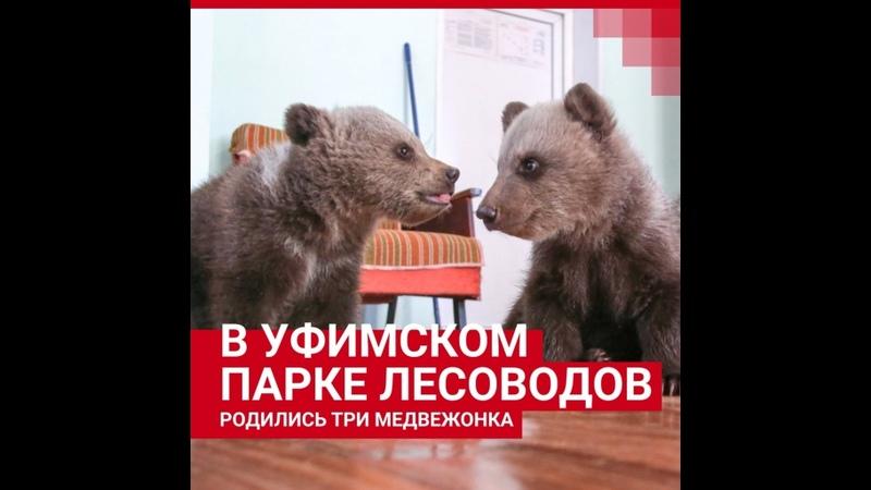 В уфимском парке родились медвежата