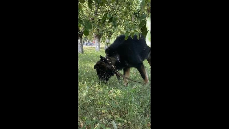Видео от Ульяны Сумароковой
