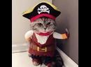 PoKPRo Забавная одежда для кошек и собак!