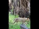 Где-то в районе Экватора в гостях у сказки или в мире диких животных