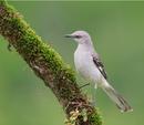 ‼Это интересно‼ 🍀Ежегодно 1 апреля отмечается Международный день птиц — интернациональный экологичес