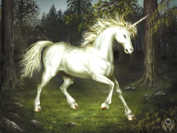 История: Самые известные мифы мира о белых лошадях Лошади, в особенности белые (хотя мы знаем, что по-научному эта масть называется серой), всегда играли особую роль в мифологии культур Европы и