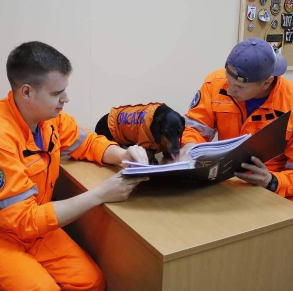 Такса московских спасателей Маруся покорила пользователей...