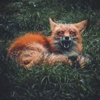 Личная фотография Анастасии Малиновой