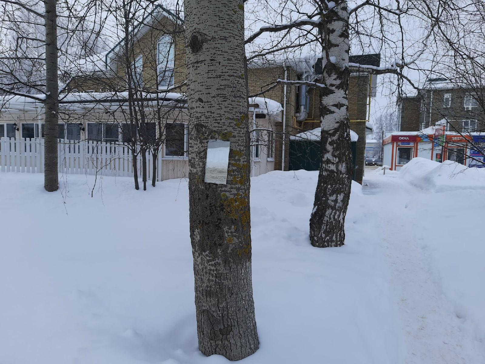 #ОтПодписчикаЗеркало на дереве аккуратно прибито. Посмотри на