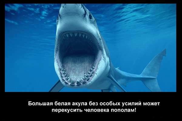 валтея - Интересные факты о акулах / Хищники морей.(Видео. Фото) UT6CCa2Z4Nk
