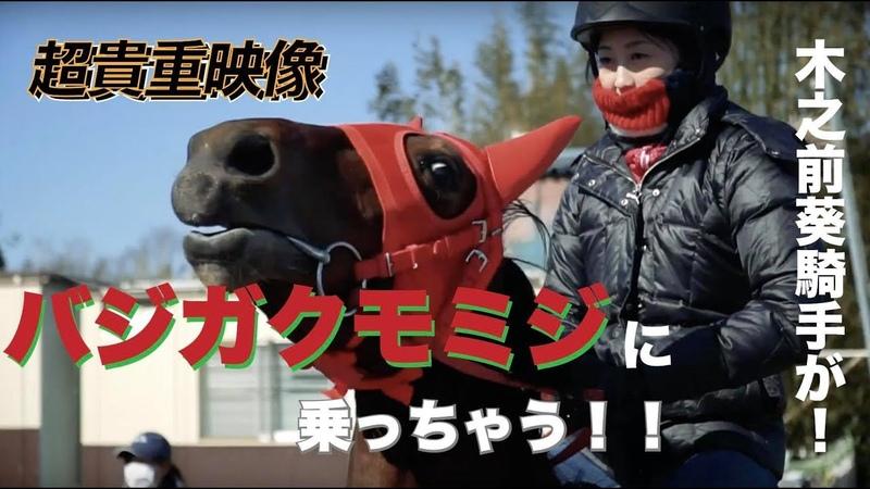 《貴重映像》メロディーレーンちゃんよりも小さい、バジガクモミジに木之前葵騎手が乗ってみた!