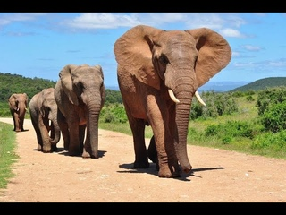 Удивительный мир животных 4 серия