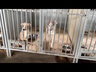 Леспаркхоз тюмень официальный сайт фото животных технического