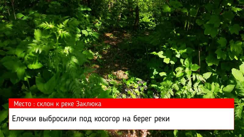 01 06 2020 г село Старая Ладога тропа здоровья акты вандализма продолжаются
