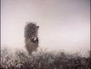 «Ёжик в тумане» Союзмультфильм 1975 год