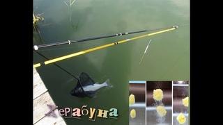 Рыбалка распространенная в Японии на поплавочную снасть Херабуна на толстолоба