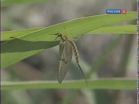 Двойная жизнь насекомых речных долин Рассказы о природе