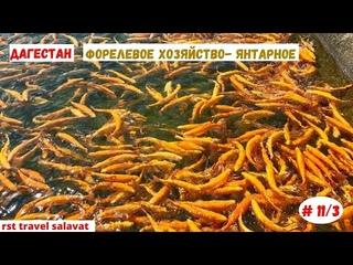 Форелевое хозяйство- Янтарное | Дагестан | Апрель 2021 | Часть 11/3-я
