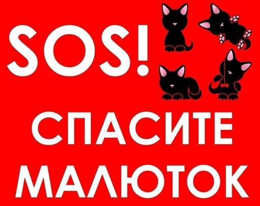 спасите котят картинка выяснить