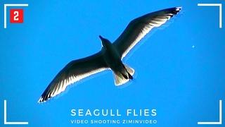 Чайка летает -2 Seagull flies मूर्ख मनुष्य カモメ 鷗 갈매기 نورس Camar Möwe Mouette Gaviota Gabbiano Martı