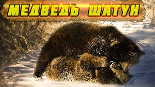 🐻Медведь шатун. Охотники были в ШОКЕ, когда узнали, чем медведь питался.