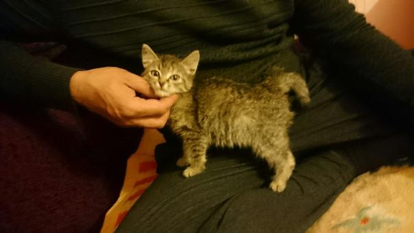Опубликуйте, пожалуйста! Отдам домашнего котёнка в добрые руки. Мама б