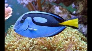 Коралловый риф. Музыка релакс. Animals & fish.