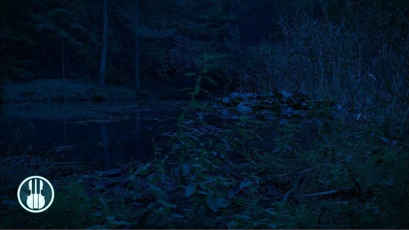 Ночь на пруду Звуки ночного болота кваканье лягушек сверчки и птицы