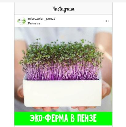 Кейс: Продвижение микрозелени в Instagram, изображение №7