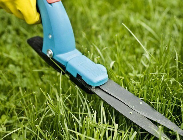 Как правильно стричь газон, изображение №8