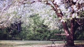 リチャード・クレイダーマンのピアノ名曲集20曲