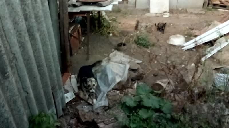 Соболь Кузя и котята