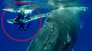 Невероятные случаи спасения людей дикими животными ❤