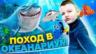 Пришли в Большой Океанариум! Ярослав купил мягкую игрушку TY Teeny Tys