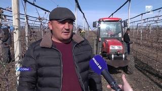 В «Садах Карачаево-Черкесии» деревья готовят к весне