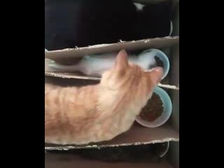 Котики в комуналке)