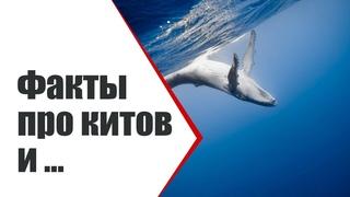 Киты, дельфины и ...   А вы знали про это? Интересные факты   Видео ко дню китов 23 июля