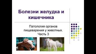 Болезни желудка и кишечника у животных